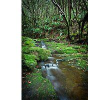 Guy Fawkes Rivulet, Tasmania #8 Photographic Print