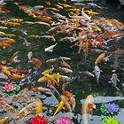 Fish Pond by Thasan