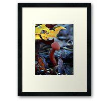 Mushroom Kingdom (3203) Framed Print