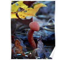 Mushroom Kingdom (3203) Poster