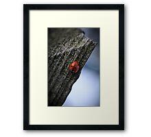 ladybird overwintering Framed Print