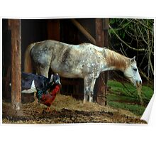 Friends ~ Chicken, Goat, Horse ~ Poster
