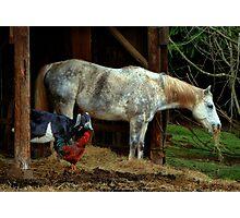 Friends ~ Chicken, Goat, Horse ~ Photographic Print