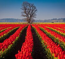 Tree in Sea of Red by Inge Johnsson