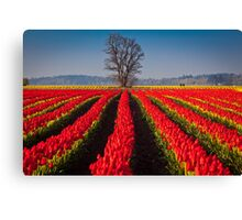 Tree in Sea of Red Canvas Print
