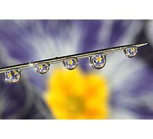 Needle drops Photographic Print
