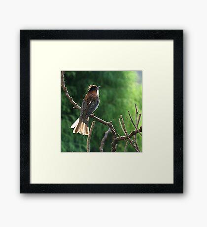 Brown Bird Framed Print