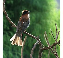 Brown Bird Photographic Print
