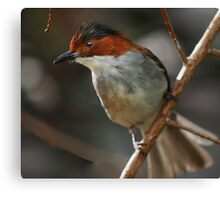 Brown and White Bird Canvas Print