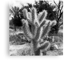 Cholla Glow Canvas Print