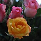 home roses by Daidalos