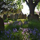 Spring Afternoon: Westerham by ColinKemp