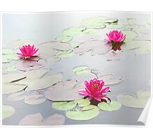Water Lilies in the Morning Poster