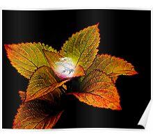 Dragon Plant Patronus Poster