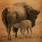 Bison 10 by Miles Glynn