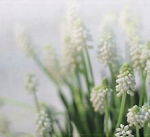 White Muscari in Texture by Linda Trine