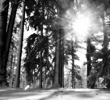 The sun and the snow by irishgirl7