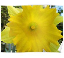 Yellow Sunshine Poster
