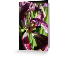 Natural Display Greeting Card