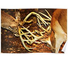 Two Big Bucks Battling Poster