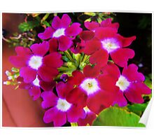 Pink Posies Poster