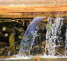 Sciple's Mill Running Water by Ginger  Barritt