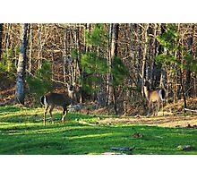 Alert Deer Photographic Print