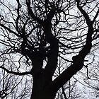 Tree silhouette by jorafc