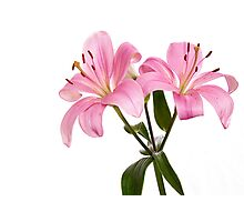 Pink Lily Photographic Print