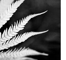 Silver Fern 2 - iphone by mattslinn