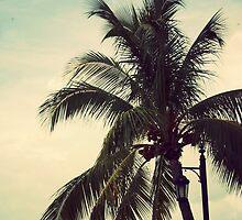 Palms  by XxJasonMichaelx