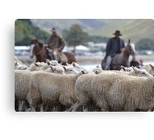 Herding sheep at Castlepoint. Canvas Print