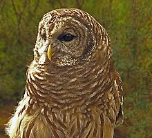 Barred Owl by George  Link