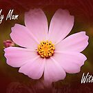 Cosmos - Mother's Day Card by Jennifer Sumpton