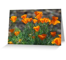 March Poppies Greeting Card