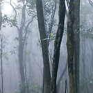 Tai Po Kau Forest, Hong Kong by Dean Bailey