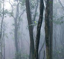 Tai Po Kau Forest, Hong Kong by Dean Bailey