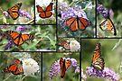 Monarch Splendor by WalnutHill