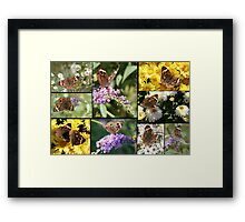 Uncommon Beauty Framed Print