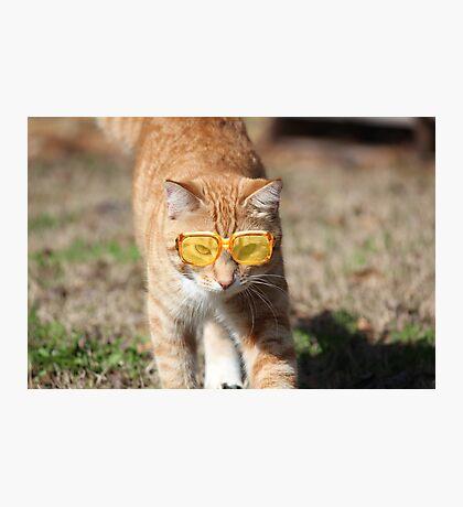 Kool Kitty Photographic Print
