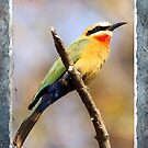 White Fronted Bee Eater II by Jennifer Sumpton