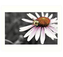 Mono Color Bee Art Print