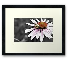 Mono Color Bee Framed Print
