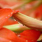 Drops of Beauty... by cathywillett