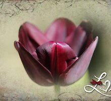 Black Tulip - St Valentine's Day Card by Jennifer Sumpton