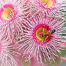 Bee on gum blossom by Celeste Mookherjee