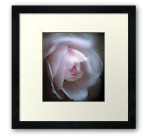 Baby Pink Rose Framed Print