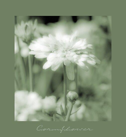Cornflower in Sage by Karen Lewis