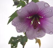 Rain on Petals by Tama Blough