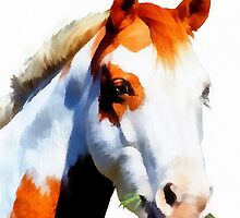 Painted Pony by Carolyn Wright